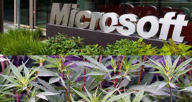 Microsoft - Cannabis