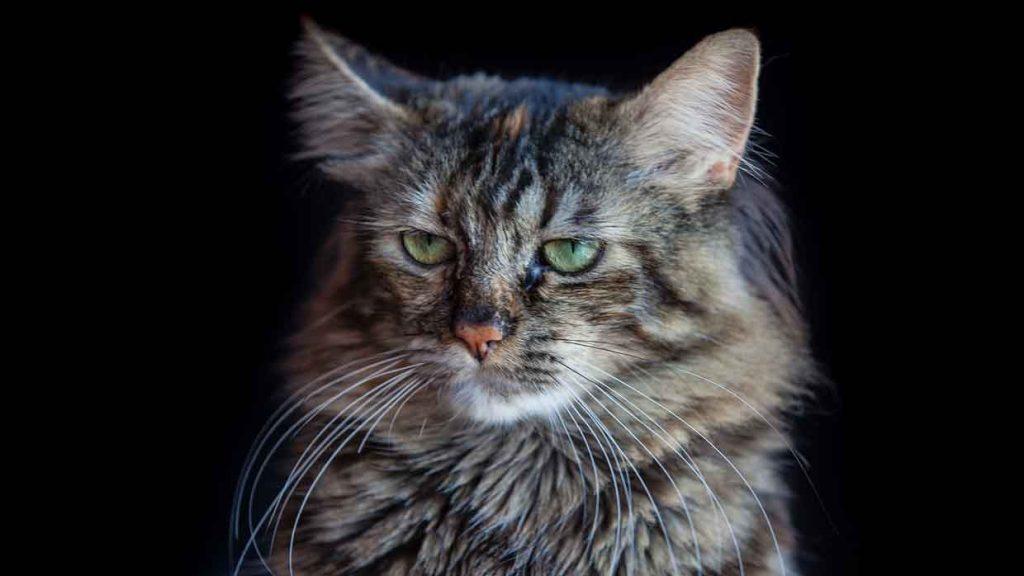 Windows 10 et le Thème Cat Expressions .