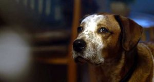 Microsoft Holiday Commercial 2020 – Find Your Joy (A Dog's Dream)